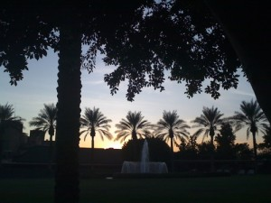 palm_trees_biltmore